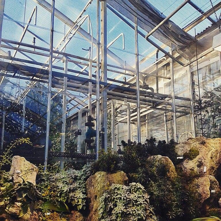 The Botanical Gardens of Gothenburg (Botaniska) are one of the best attractions in the city