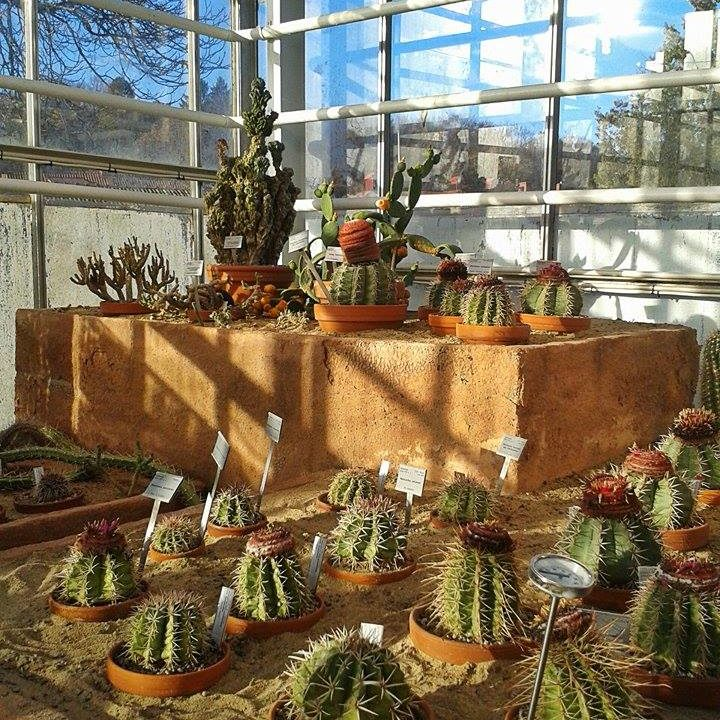 Gothenburg and Sweden really are THE place to be for cactus and plant lovers